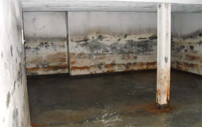 mold cleanup Boise