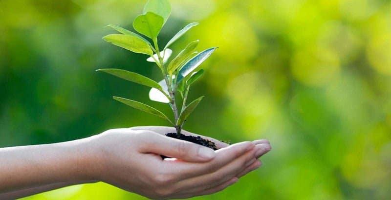 environmental restoration services